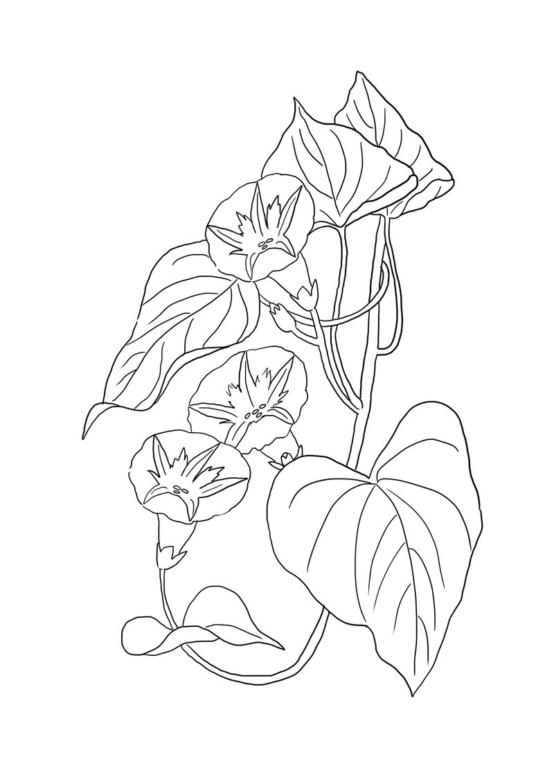Flowers Color By Numbers Coloring Pages