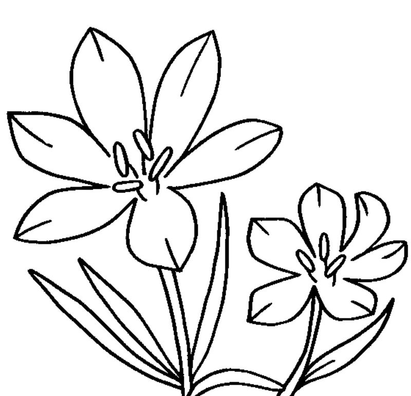 Flowers Coloring Pages For Toddlers