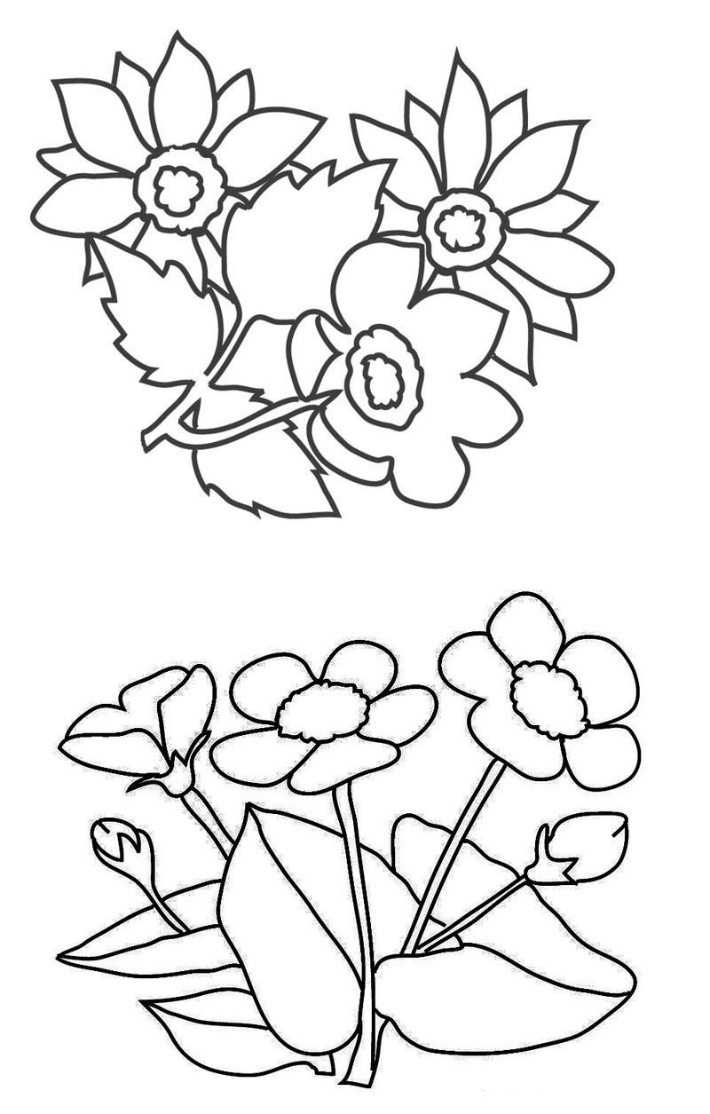 Flowers Coloring Pages Free Printable