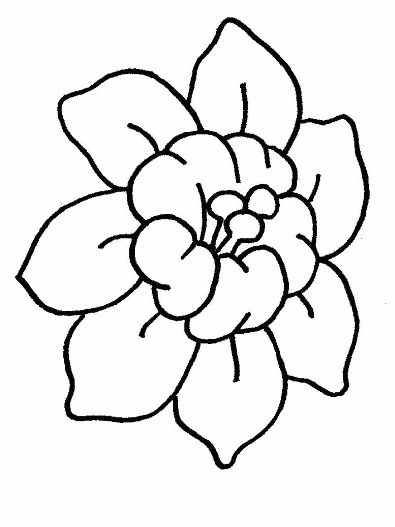 Flowers Coloring Pages Vector