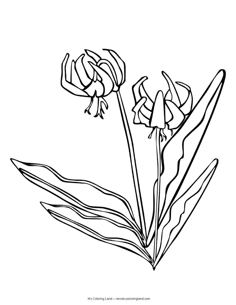 Flowers Coloring Pages With Color