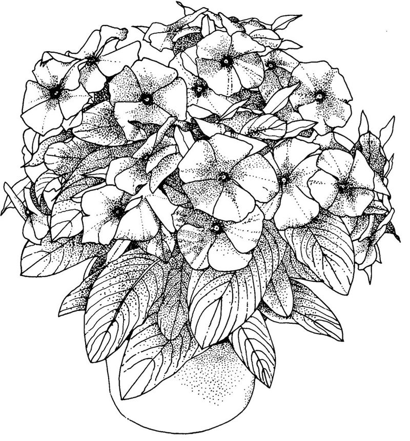 Flowers Colouring Pages For Adults