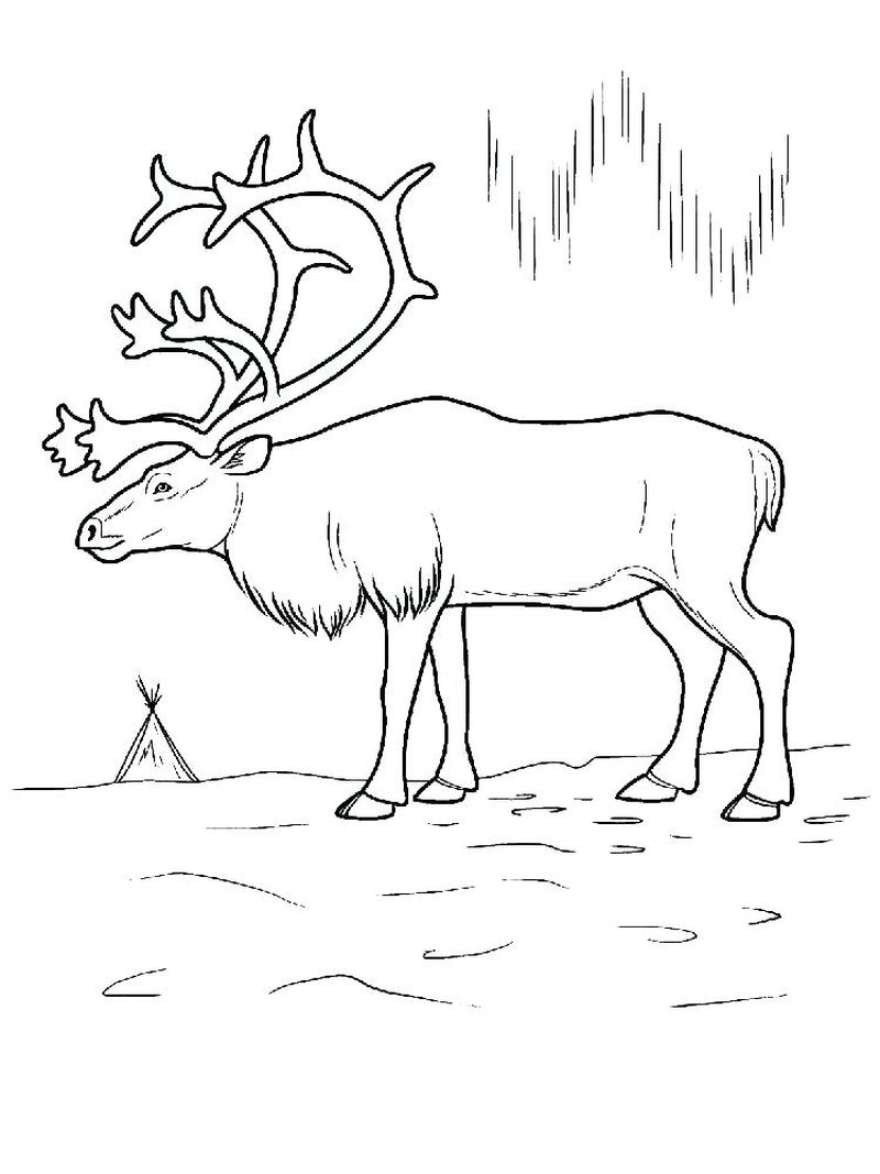 Free Coloring Book Pages Deer