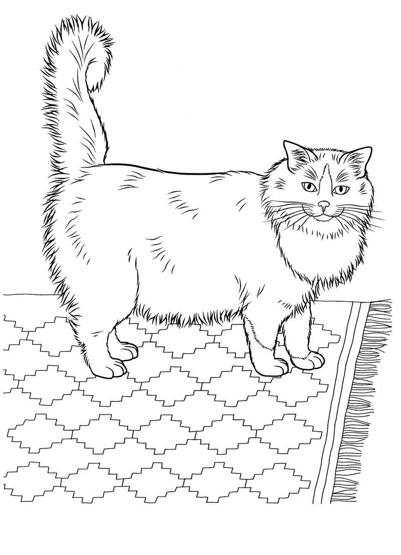 Free Coloring Pages Cute Cats