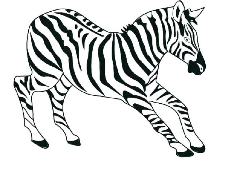 Free Coloring Pages Horse Zebra