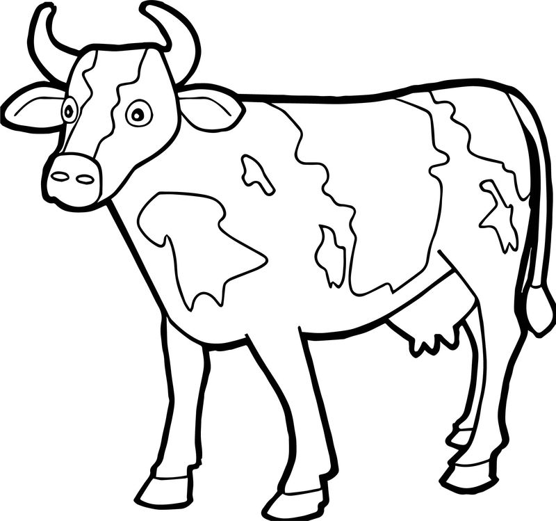 Free Cow Printable Coloring Pages
