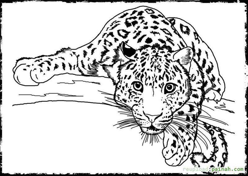 Free Farm Animals Coloring Pages