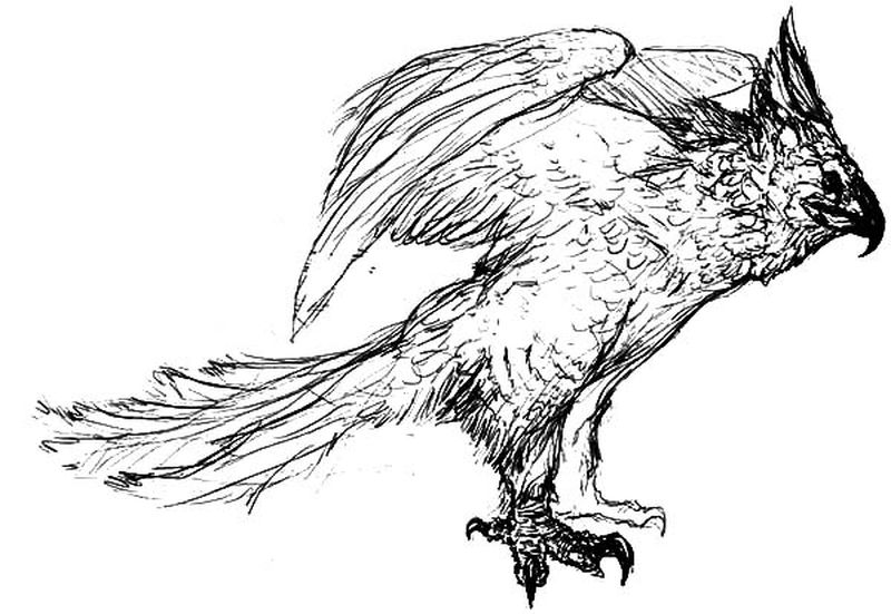 Free Printable Eagle Coloring Pages