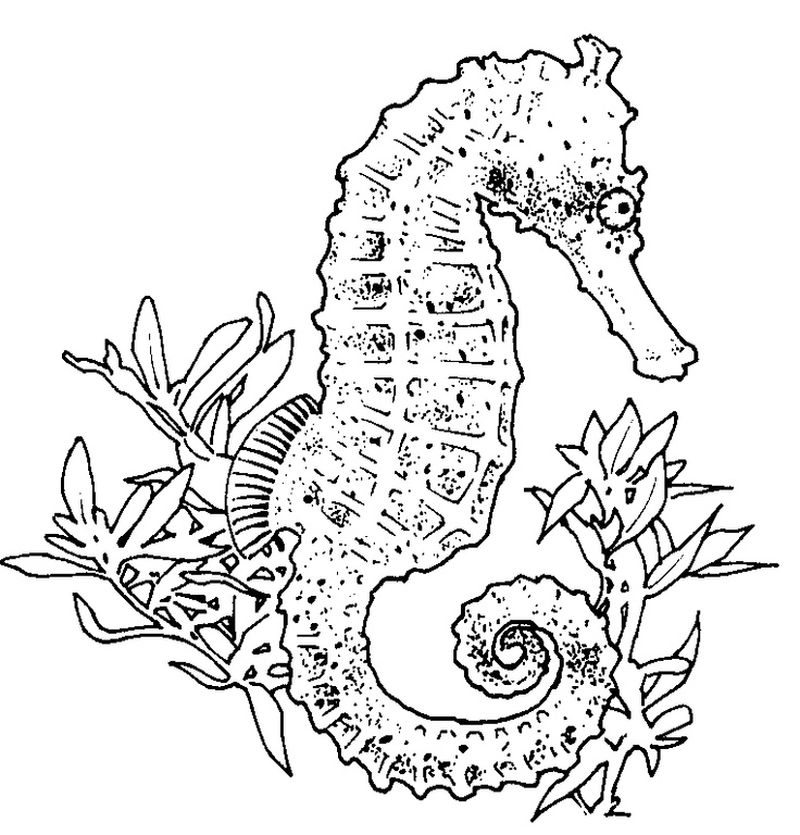 Funny Seahorse Coloring Pages