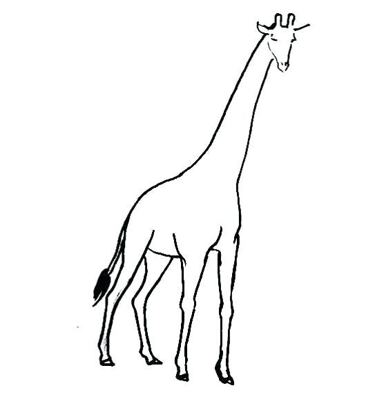 Giraffe Coloring Pages For Preschoolers