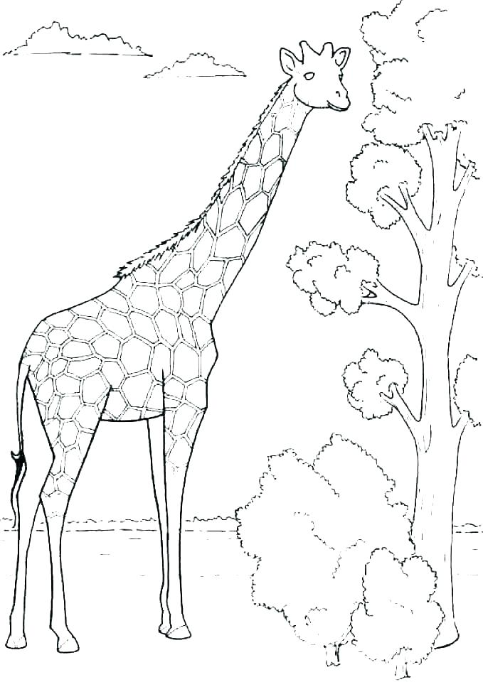 Giraffe Coloring Pages Free