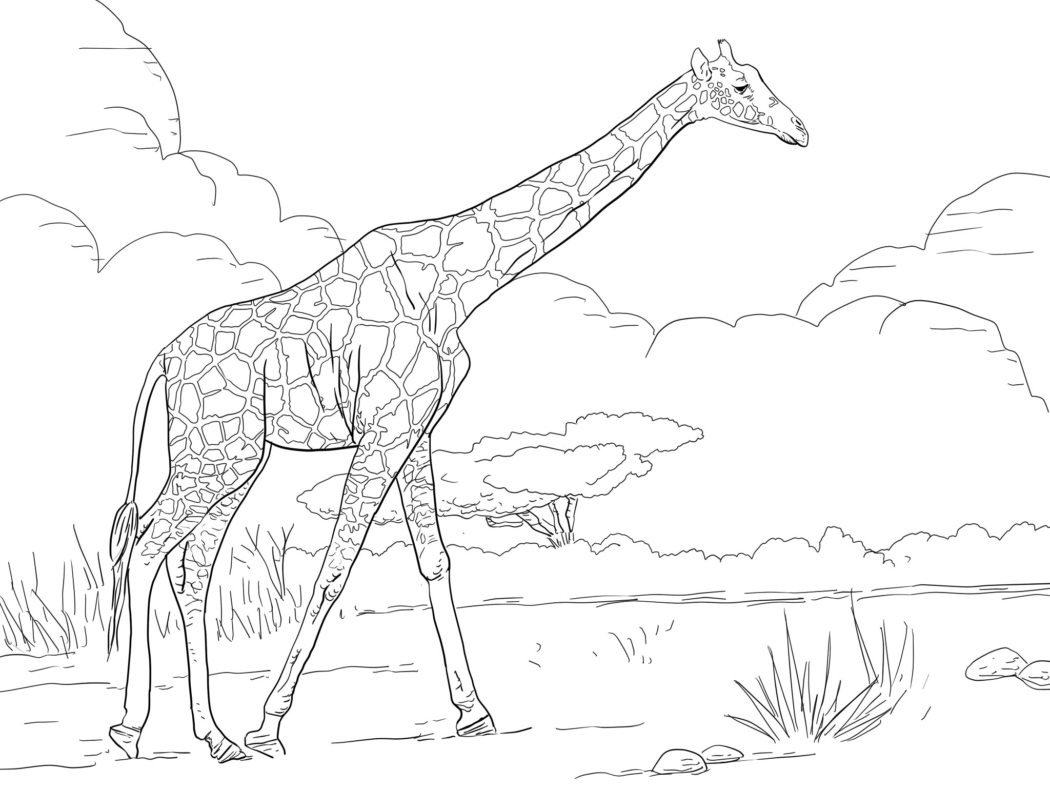 Giraffe Coloring Pages Momjunction