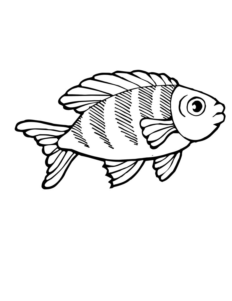 God Made Animals Coloring Pages