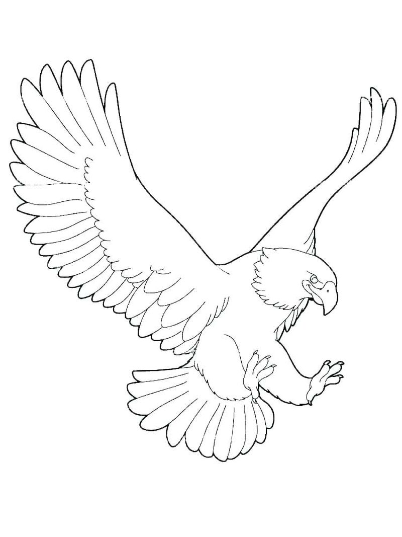Golden Eagle Coloring Pages
