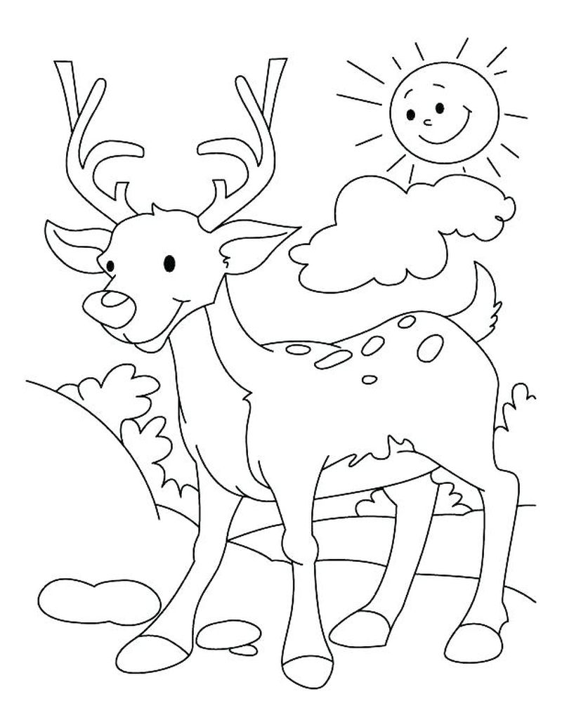 Hard Deer Coloring Pages