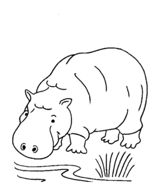 Hippo Coloring Page Image