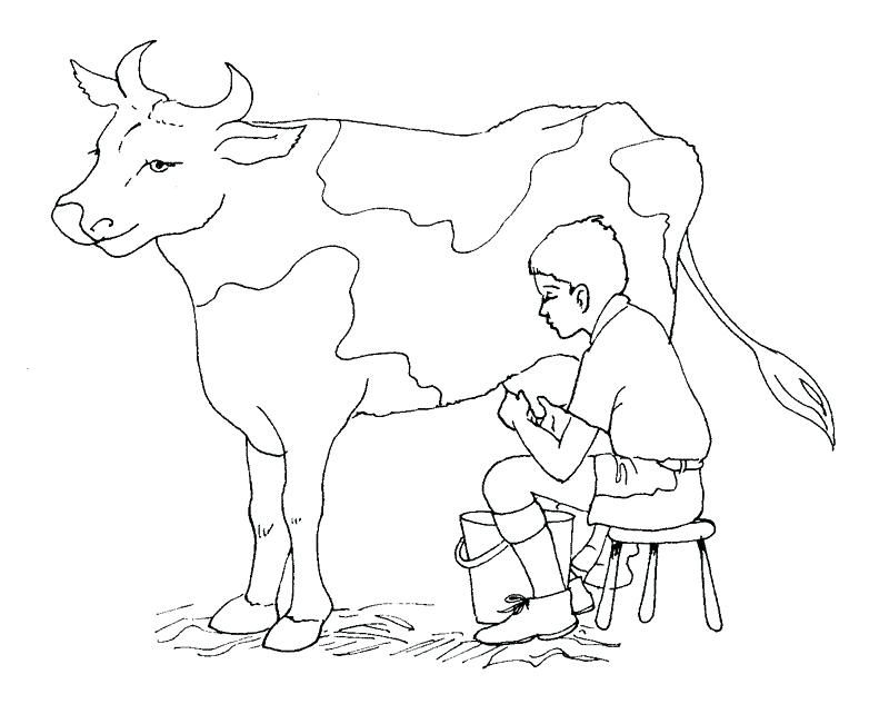 Holstein Cow Coloring Pages