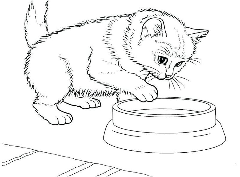 Kitten Coloring Pages To Print For Free