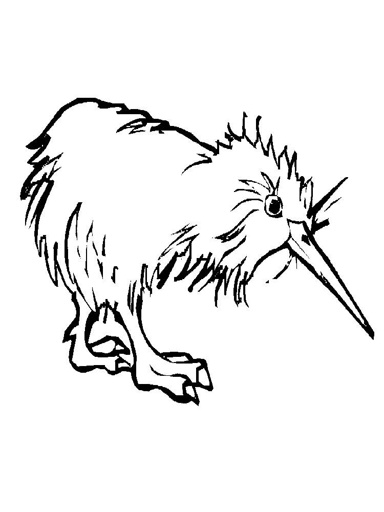 Kiwi animal coloring pages picture