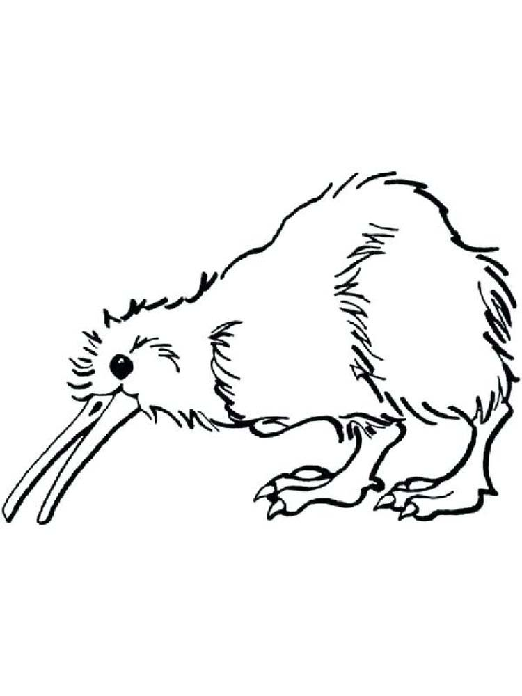 Kiwi coloring pages image best