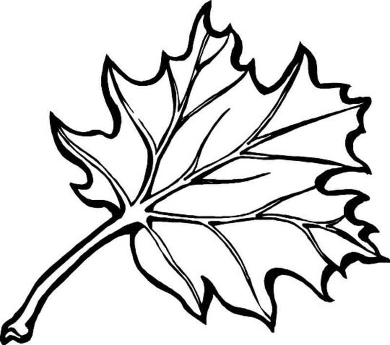 Leaf Coloring Pages Easy
