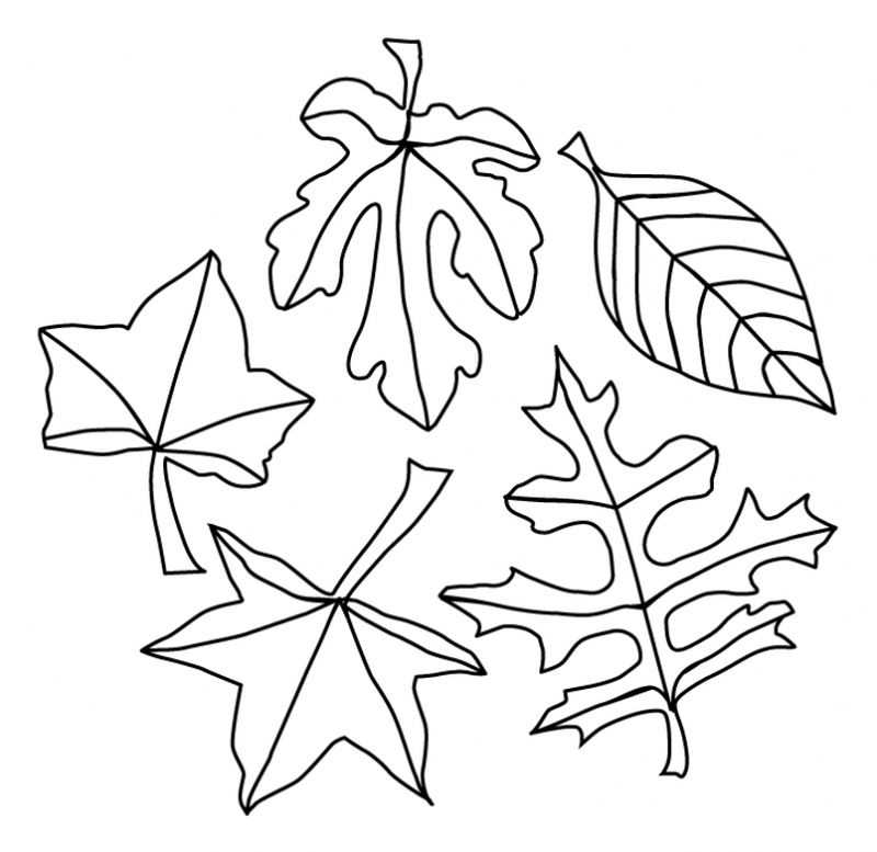 Leaf Coloring Pages For Toddlers