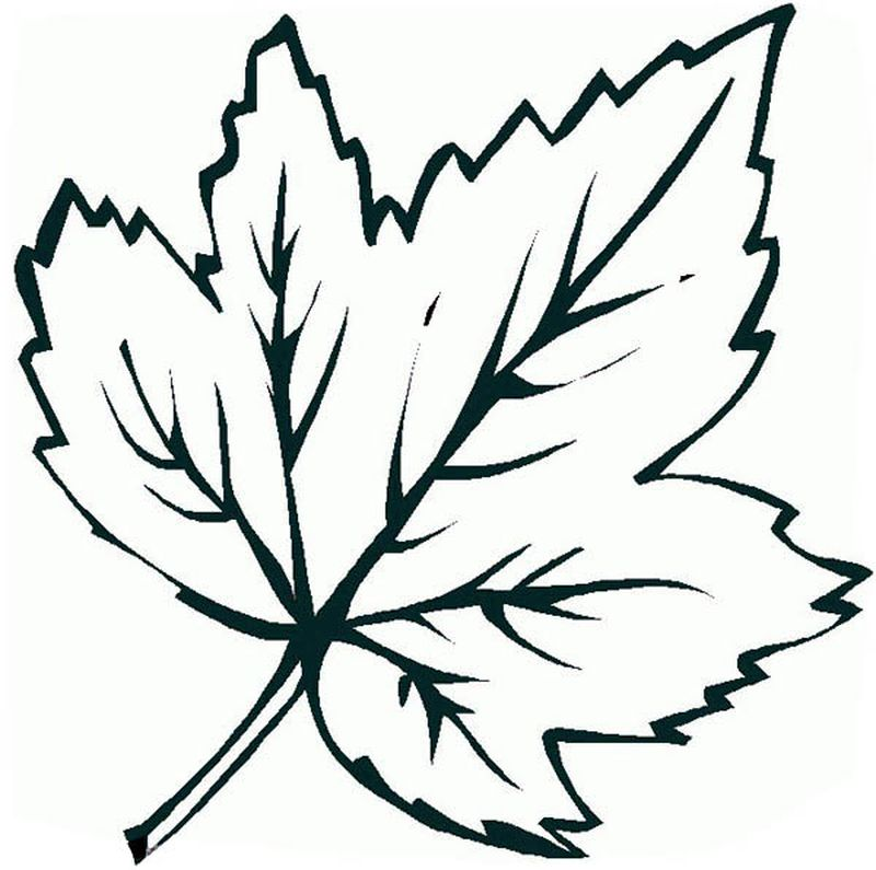 Leaf Coloring Pages Pictures