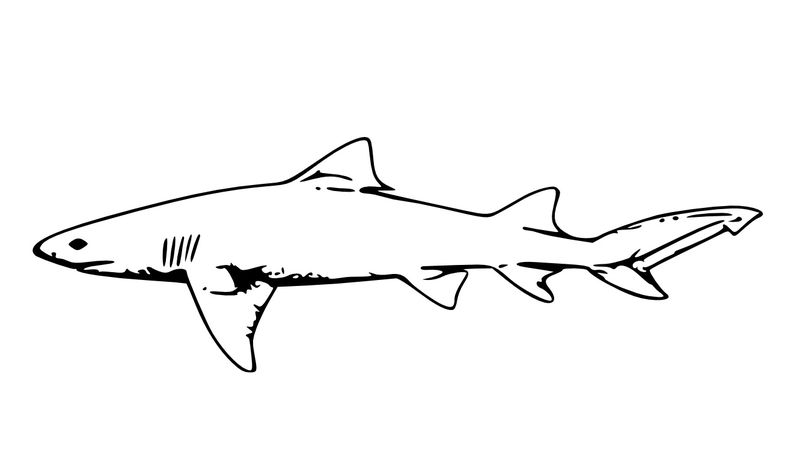 Lego Shark Coloring Pages