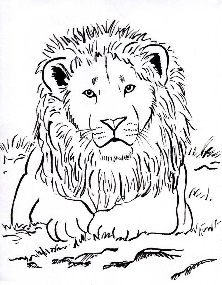 Lion Coloring Pages Cartoons