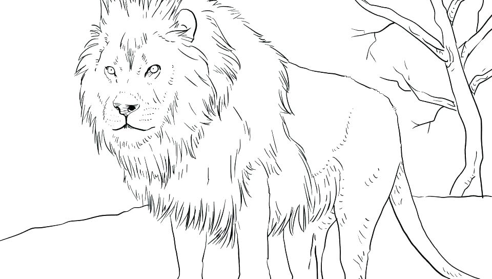 Lion Coloring Pages Easy