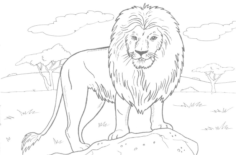 Lion Coloring Pages For Preschool