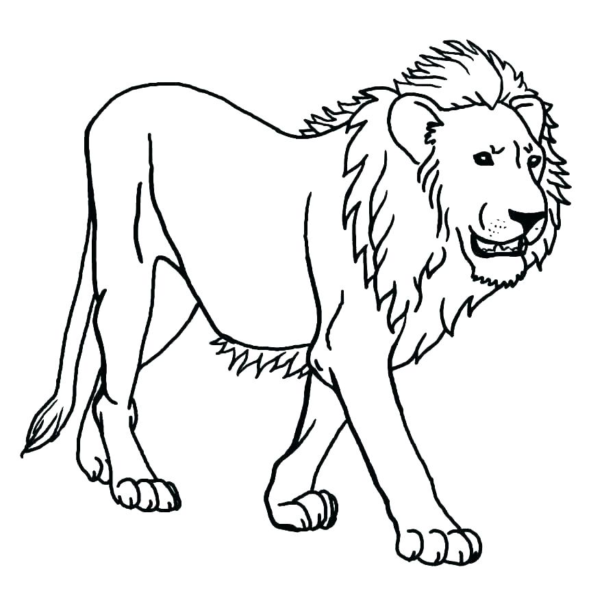 Lion Coloring Pages Free