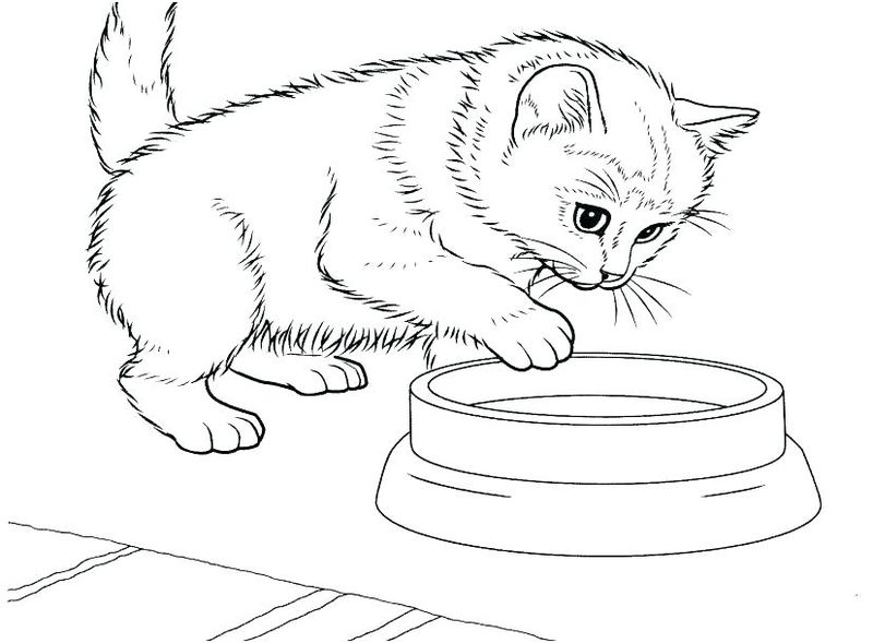 Little Cats Coloring Pages