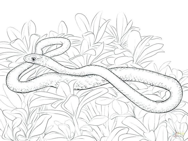 Lizard Snake Coloring Page