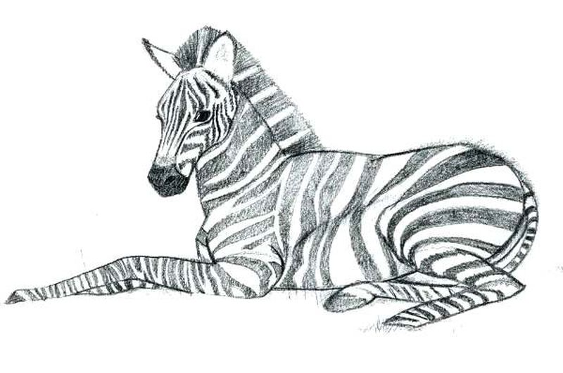 Marty Zebra Madagascar Coloring Pages 1