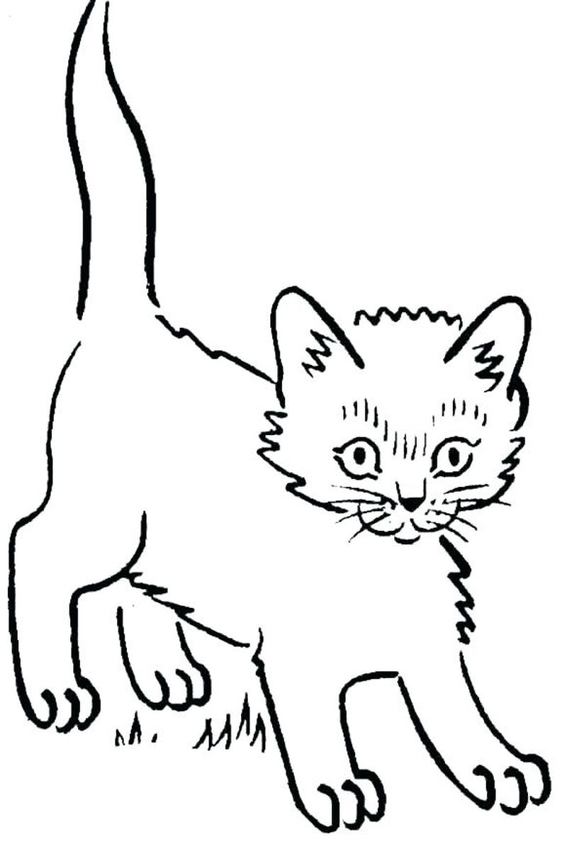 Momjunction Kitten Coloring Pages