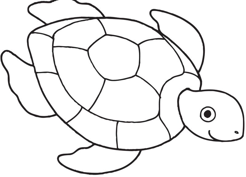 Momjunction Turtle Coloring Pages