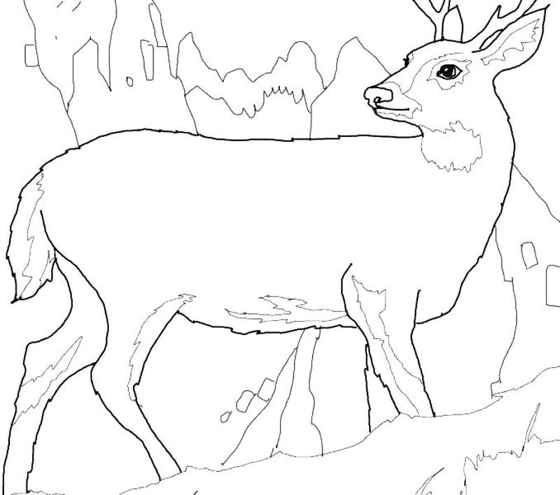 Mother And Baby Deer Coloring Pages