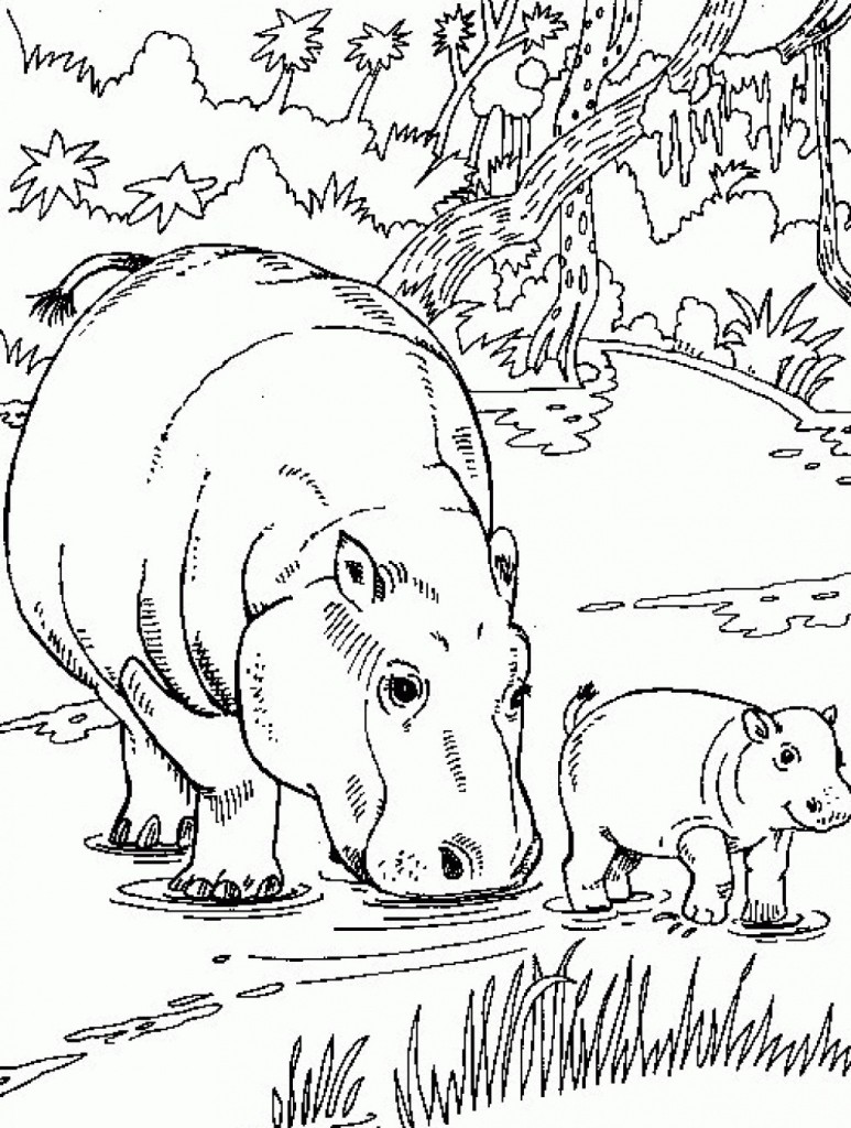 New Hippo Coloring Pages Images