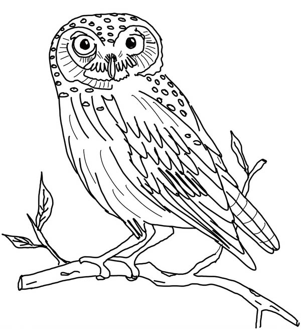 Owl Coloring Pages For Adults Free Printable