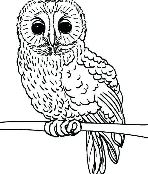 Owl Coloring Pages For Adults To Print