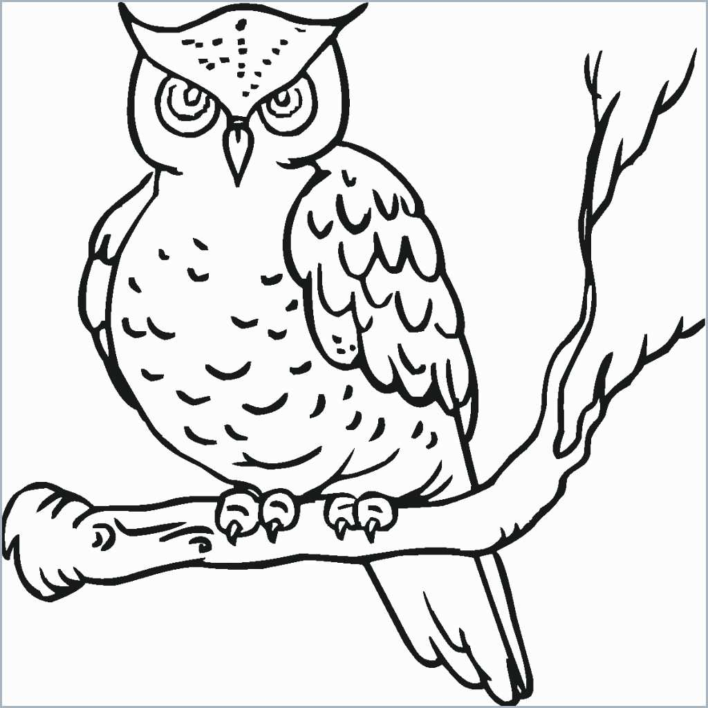 Owl Coloring Pages For Preschoolers