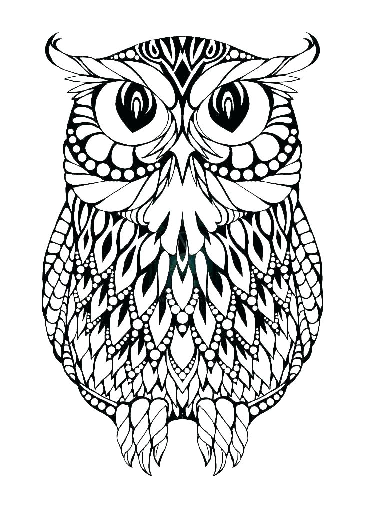 Owl Coloring Pages Pdf
