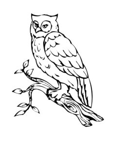 Owl In A Tree Coloring Page