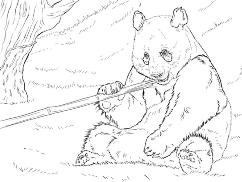 Panda Coloring Book Pages