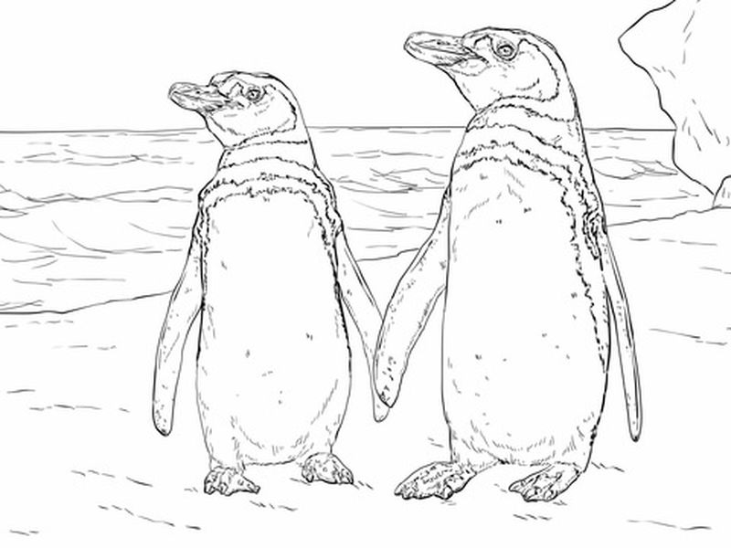 Penguin Coloring Pages For Preschoolers