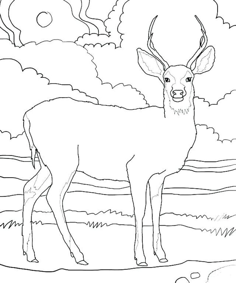 Printable Coloring Pages For Deer