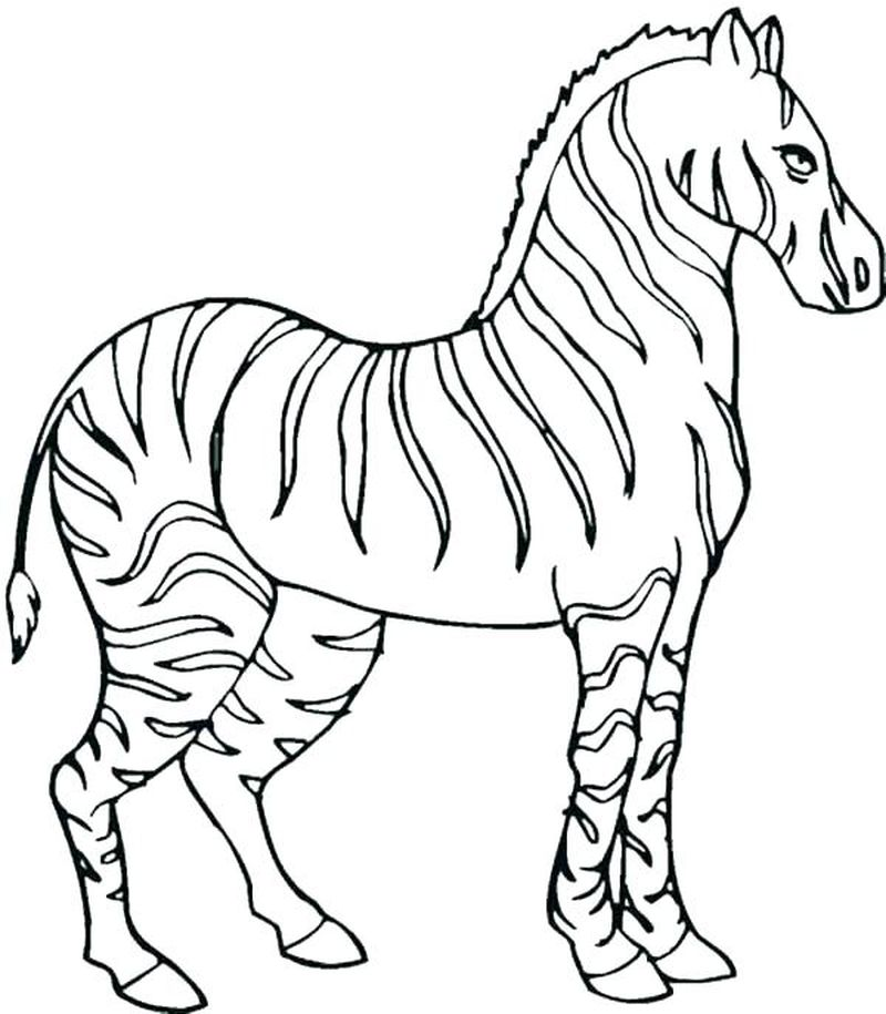 Printable Coloring Pages Of A Sitting Zebra