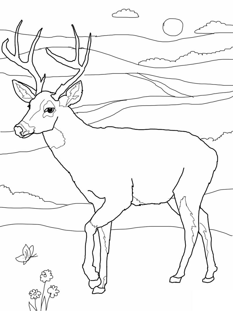 Printable Deer Coloring Pages For Adults
