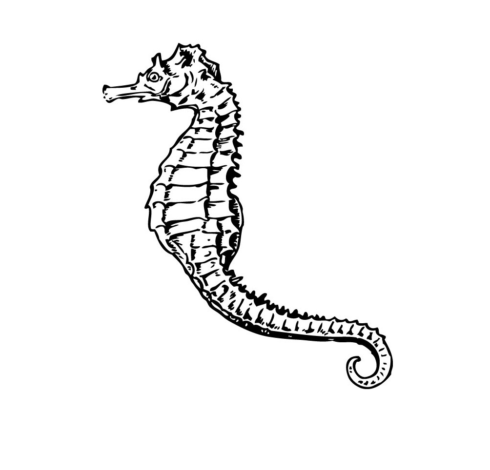 Printable Seahorse Coloring Pages Pict